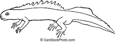 Triton or newt, vintage engraving. - Triton or newt, vintage...