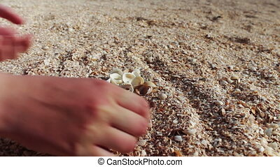 A mans hand takes seashells, sand on the beach - Female hand...