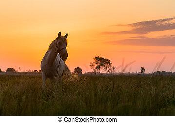 caballo, pasto, en, pasto,