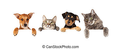 Dogs and Cats Hanging Over White Banner - Row of cats and...