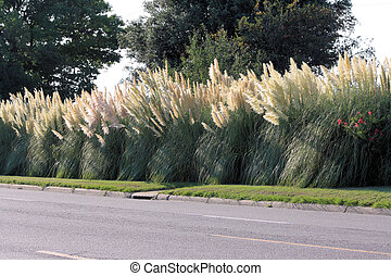 Cattails along a road