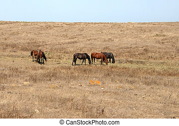 Wild horses in the great western USA prairies
