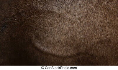 detailed horse skin - a very detailed scene of a brown horse...