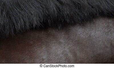 horse mane while moving close-up - a detailed view of horse...