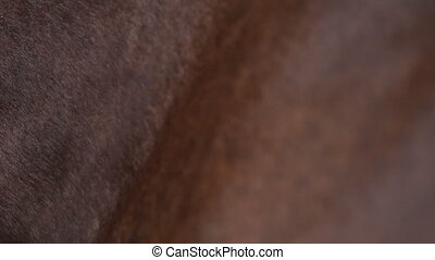 horse skin while walking close-up - a close up of the...