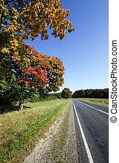 roadside road in autumn