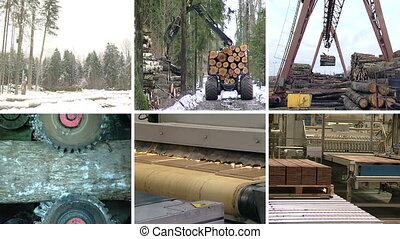 timber industry collage - Timber and lumber industry Tree...