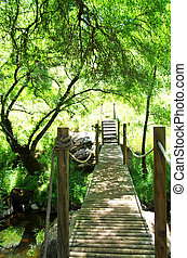 wood bridge in forest at Portugal
