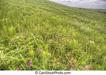 grassy hillside, Flint Hills, Kansa - spring grasses and...