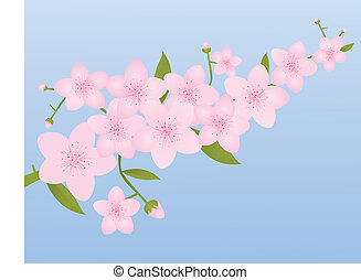 Pink Cherry Blossoms - Cherry Blossoms on Spring Blue...