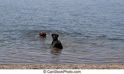 Dogs - dogs playing