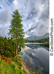 Pine in a mountain lake