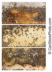Beehive frames of honey bees - Three frames of Apis...