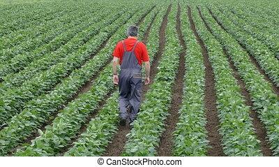 Farmer in soy bean field