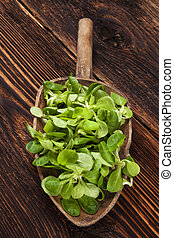 Fresh green field salad - Fresh green field salad on old...