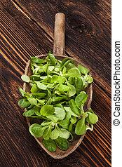 fresco, verde, campo, salada