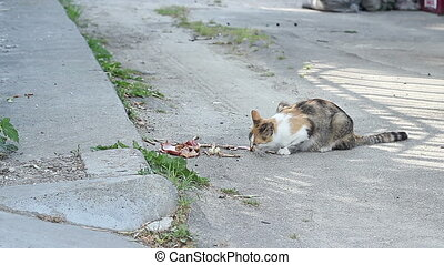 Stray Cat Eats - A stray cat from neighbourhood eating some...