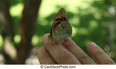 Butterfly Sitting on Finger - Wild shot with a butterfly...