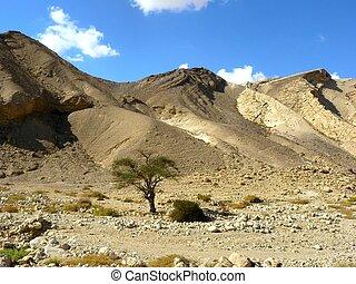 Negev Desert - Vadi Peres, Negev desert.The Negev is the...