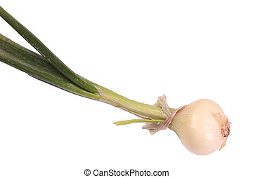 Scallion - scallion, (also known as a spring onion, salad...
