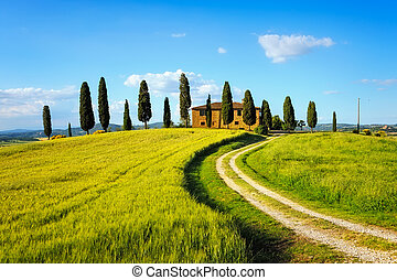 Tuscany, farmland, cypress trees and white road on sunset....