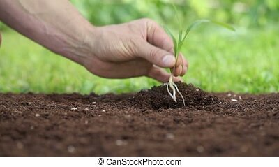 hands planting a seedling in the ground