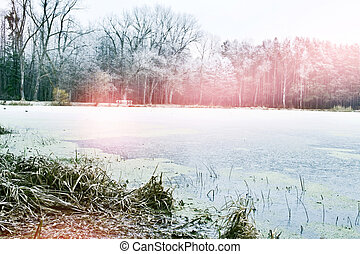 lake in the winter forest
