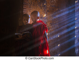 Young Buddhist monk reading and studyin - Young Myanmar...