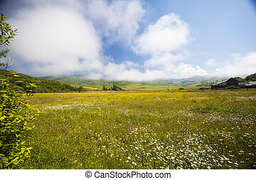 Summer meadow and deep blue sky