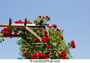 Rose arbor - Part of a rose arbor with red flowering roses