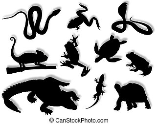 Reptiles and amphibians in different poses and attitudes