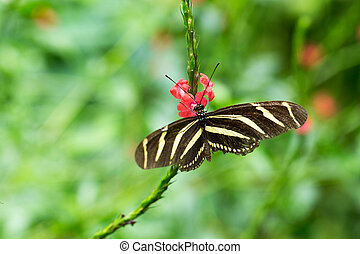 Butterfly perched on a flower - Butterfly perched on a...