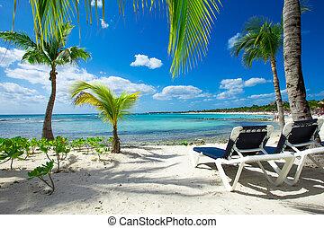 beach - Palm and tropical beach