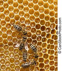 abejas, enjambrando, en, Un, Panal,