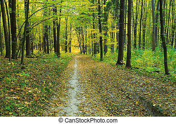 forest trees nature green wood backgrounds