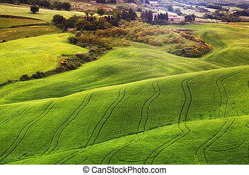 Beautiful rural landscape with the green field, Tuscany....