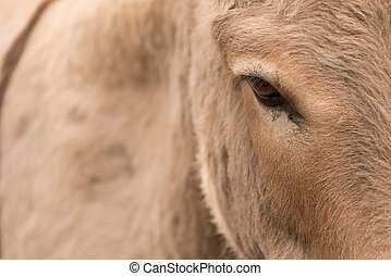 Close-up of head and flank of donkey