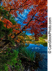 Brilliant Fall Foliage in Texas - Beautiful Fall Foliage...