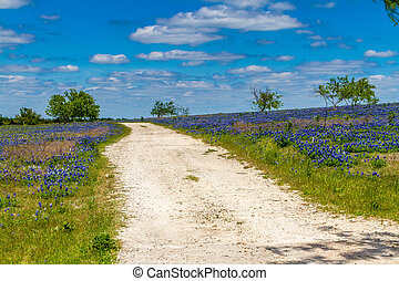 Texas Dirt Road with Wildflowers