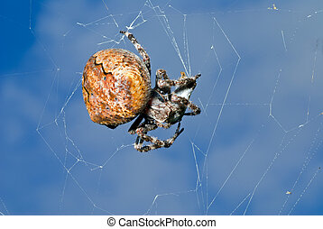 Spider on spider-web 1 - A close up of the doe of spider on...