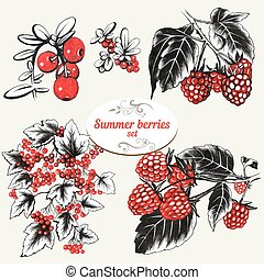 Raspberries - Set of hand drawn summer berries raspberries