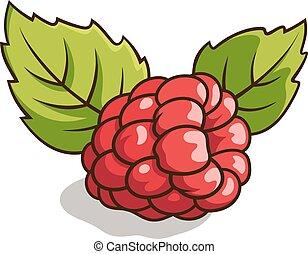 Raspberry - Vector illustration of fresh, ripe raspberry...