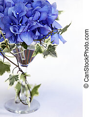 Hydrangea flowers - Blue flowers and ivy in a glass...