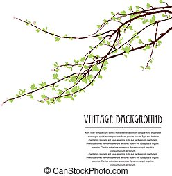 Blossoming tree brunch - Spring background with blossoming...