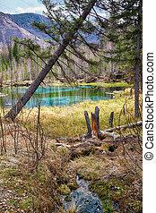 Swampy stream in Altay Taiga - Swampy mossy stream near Blue...