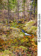 Swampy stream in Altay Taiga - Swampy mossy stream in Altay...