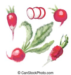 SET Radish with leaf - SET red Radish with leaf. Hand drawn...