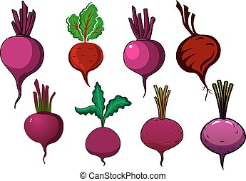Purple beets vegetables with stalks and leaves - Garden...