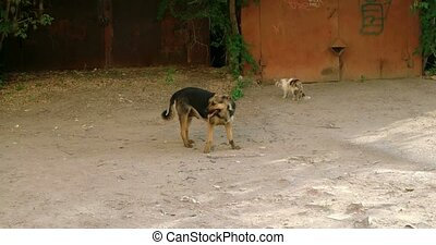 Meeting of feral cat and dog. Dog going out from cat