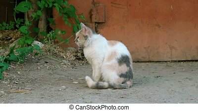 Side view of three color feral cat sitting alone outdoors 4k